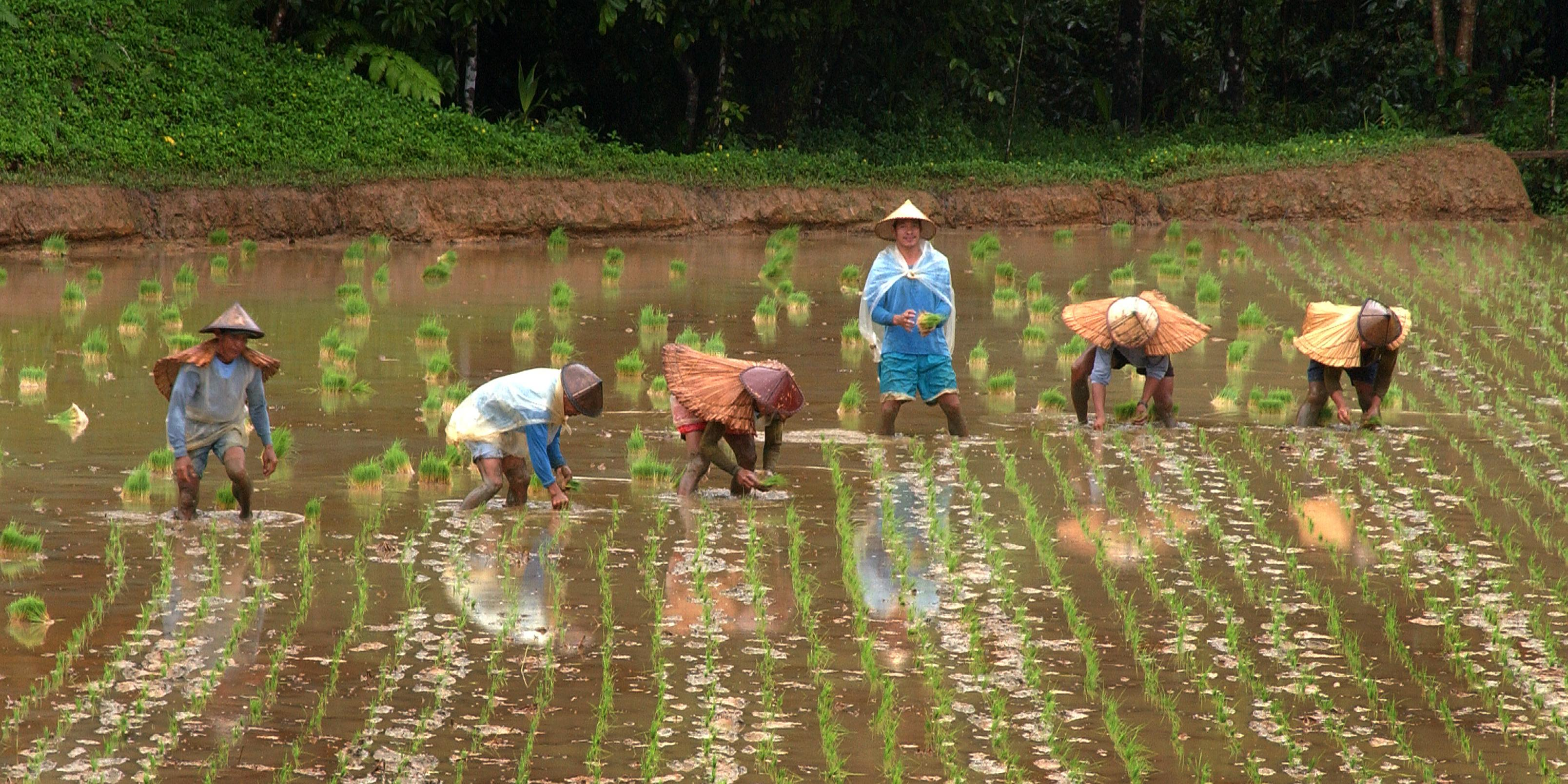 water saving rice production systems - HD3216×1609